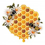 foto of honey-bee  - Floral Honey Concept - JPG