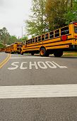 School Buses In a Line