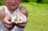 Young girl outdoors in summer holding out fresh picked daisies