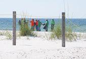 PERDIDO KEY, FL - JUNE 9: BP oil spill workers clean the beaches on June 9, 2010 as oil threatens the pristine Gulf Shores National seashore near Pensacola, FL.