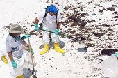 PENSACOLA BEACH - JUNE 23: A BP oil workers attempt to clean oil covered sand on June 23, 2010 in Pe