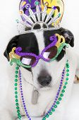 Cute dog dressed up for party