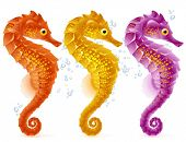 stock photo of seahorses  - Vector sea horse - JPG