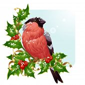 Christmas greeting card. Vector bullfinch and holly