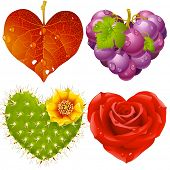 Shape of heart set 3. Fall leaf, grapes, cactus and rose