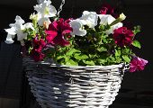 Flowers In Full Sun Light In There Hanging Basket poster