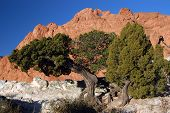 The Old Tree Garden Of The Gods
