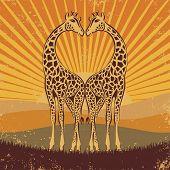 loving giraffes in retro style, vector