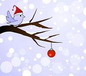 winter bird on branch