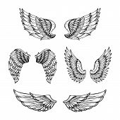 Hand Drawn Wing. Sketch Angel Wings With Feathers. Vector Tattoo Design Isolated. Angel Wing Tattoo, poster