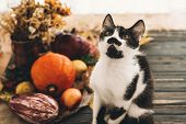 Happy Thanksgiving Concept. Cute Funny  Cat Sitting At Beautiful Pumpkin In Light, Vegetables On Bri poster