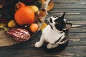 Happy Thanksgiving Concept. Cute Cat Sitting At Beautiful Pumpkin In Light, Vegetables On Bright Aut poster