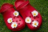 Red fashion clogs on grass with daisies