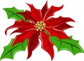 Vector Illustration of a Poinsettia