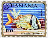 PANAMA - CIRCA 1978: A stamp printed in Panama shows tropical reef fish Anisotremus Virginicus, circa 1978