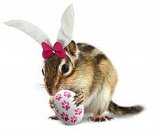 Funny Chipmunk With Bunny Ears And Easter Egg