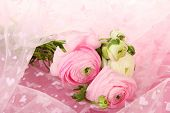 Ranunculus (persian buttercups), on pink cloth