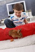 Cute boy playing with pet bunny climbing out of rabbit toy on living room carpet, having carrot.