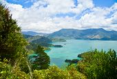 Marlborough Sounds as seen from Queen Charlotte Track