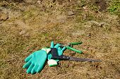 Rubber Gloves Hand Saw Clippers Tree Twig Cut