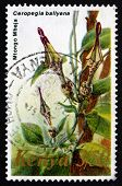 Postage Stamp Kenya 1983 Ceropegia Ballyana, Flowering Plant