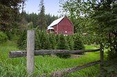 Fence, Barn, And X-mas Trees.