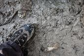 Stepping In Mud