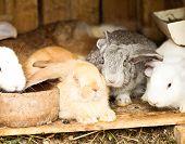 Rabbits' Hutch