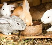 stock photo of rabbit hutch  - Three different rabbits closeup in hutch close up - JPG
