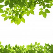 pic of insect  - Green Leaves Border isolated on white background - JPG
