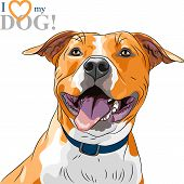 image of staffordshire-terrier  - closeup portrait of the smiling dog American Staffordshire Terrier breed - JPG