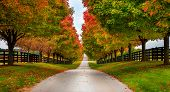stock photo of bluegrass  - Fall alley - JPG