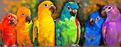 foto of parrots  - Original pastel paintings on paper - JPG