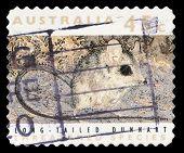 AUSTRALIA - CIRCA 1992: a stamp printed in the Australia shows Long-tailed Dunnart, Sminthopsis Longicaudata, Marsupial Mammal, circa 1992