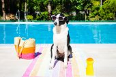 Funny Dog On Summer Vacation At Swimming Pool
