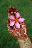 Beautiful Plumeria Flower In Henna Hand