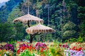 beautiful flowers garden at doi angkhang Mountain Chiang Mai Thailand