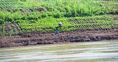 Growing crops on river banks. Mekong River Cruise in Laos. Popular tourist adventure trip by slow boat from Huay Xai to Luang Prabang.