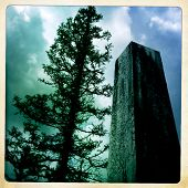 Instagram filtered style image of an obelisk and gnarly pine tree