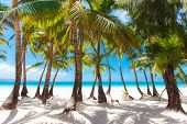 Tropical Sand Beach With Palm Trees, Summer Vacation