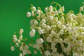 Beautiful lilies of the valley on green background
