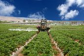 A Crop Sprayer, busy spraying Strawberry Fields with Insecticide in Orange County California. Strawberries are a vital cash crop in Southern California, they grow fast and are very tasty.