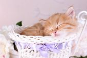 Cute little red kitten  sleeping in decorative basket, on bright background
