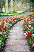 Spring Landscape With Colorful Tulips And Hyacinths