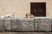 foto of fortified wall  - Fortified Wall around Tunsian Old Town with Cats - JPG