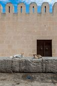Medina Wall With Cats (2)