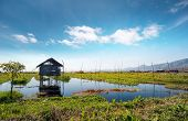 Inle Lake Myanmar, Shan state. Floating gardens of rural Intha village farms on water. Eco nature pa
