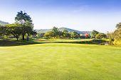 Golf Course Green Grass