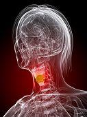 highlighted larynx