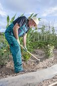 Farmer Working The Land